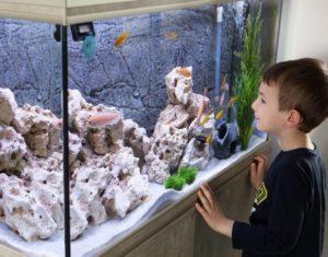 Aquarium Umzug