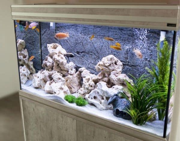 Aquarium jetzt mit einer Umzugsfirma transportieren lassen